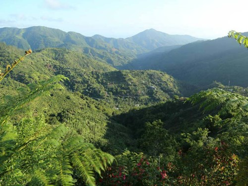 Blue and John Crow Mountains National Park in Jamaica